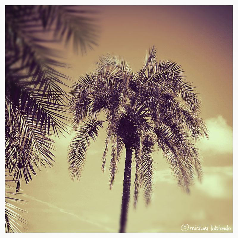 tampa-location-personal-shooter-palm-trees